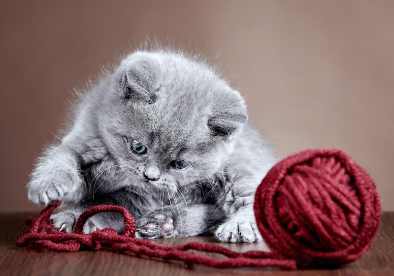 Котенок играющий с клубком картинки