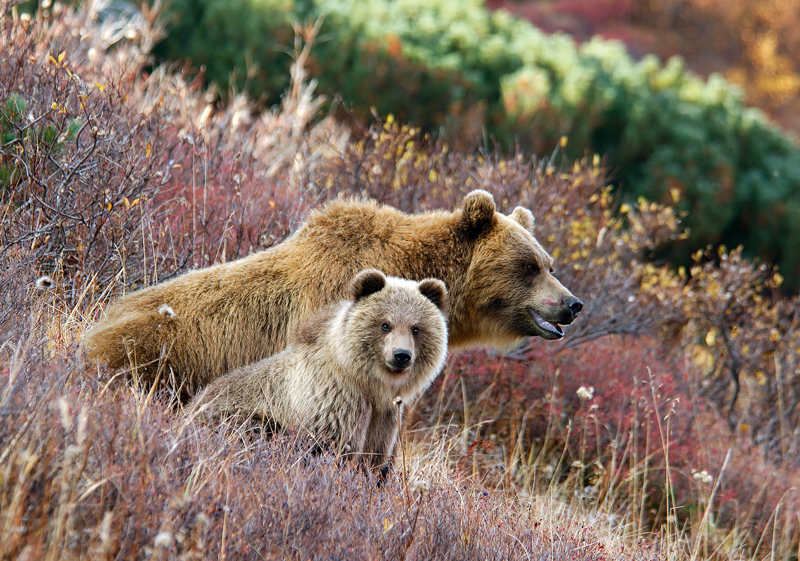 Картинки любовь, открытка медведь с фото