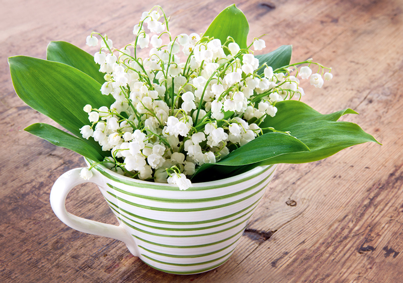 Фото весенних цветов ландышей