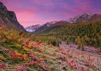 Осенний ковёр. Республика Алтай