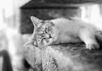 Кот на ограде