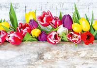 Тюльпаны в ящике