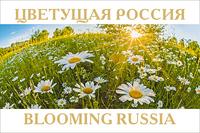 Цветущая Россия (13 почтовых открыток в наборе)
